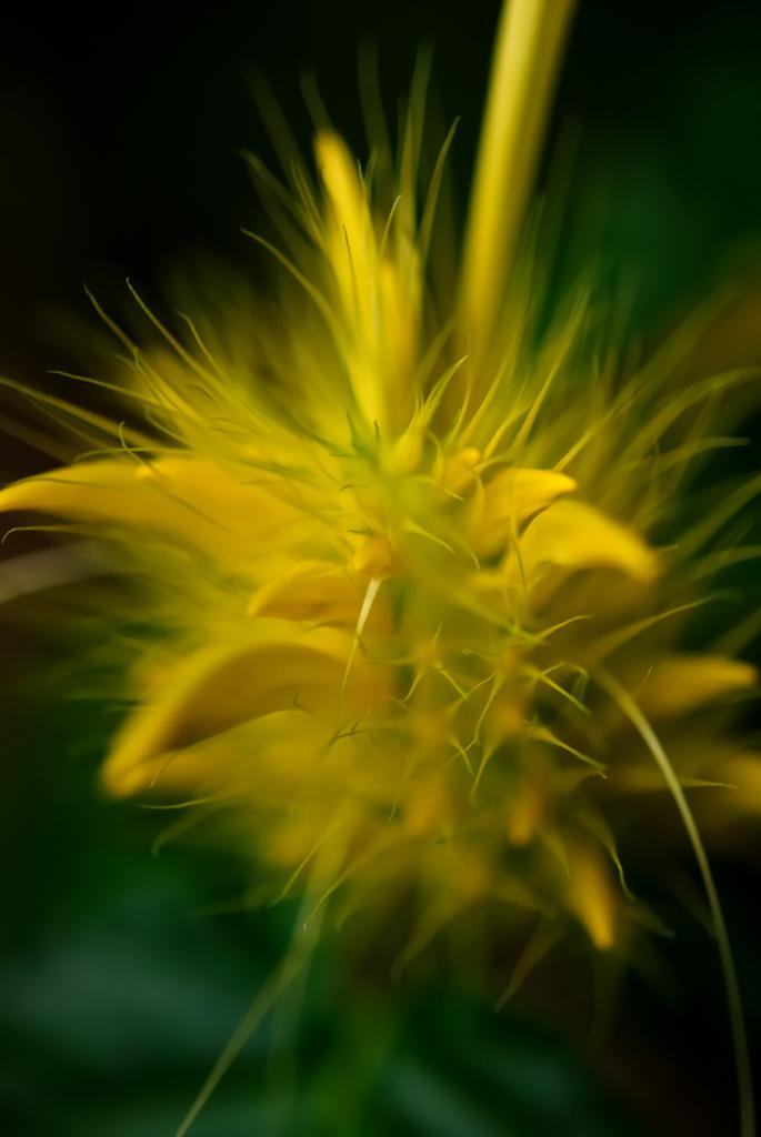Strange Yellow