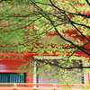 比叡山の春
