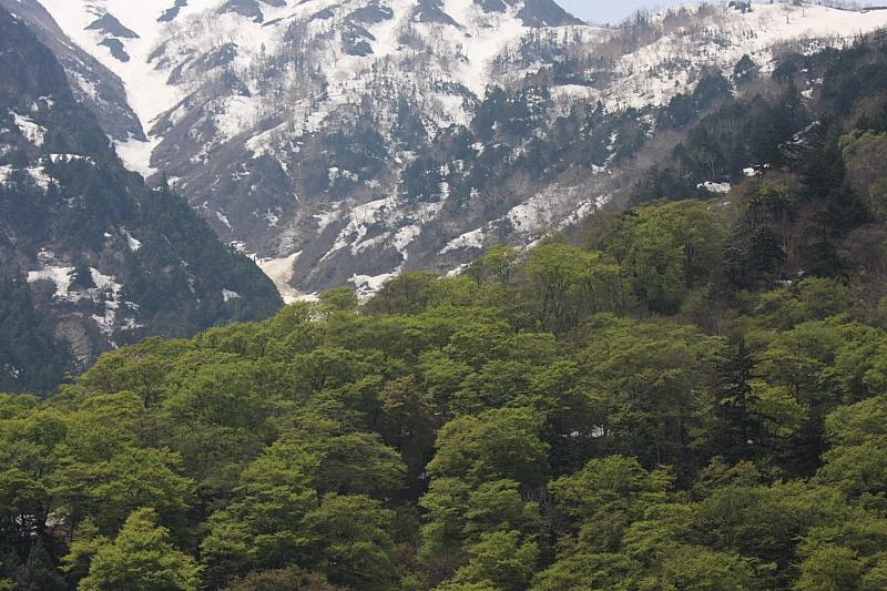 新緑と残雪2