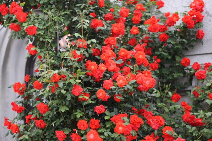 薔薇の世界2