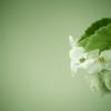 photo46671