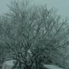 大雪と墓地
