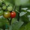 雨の庭02