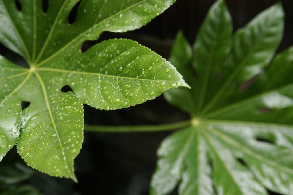 雨の庭03