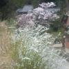 春 2008040
