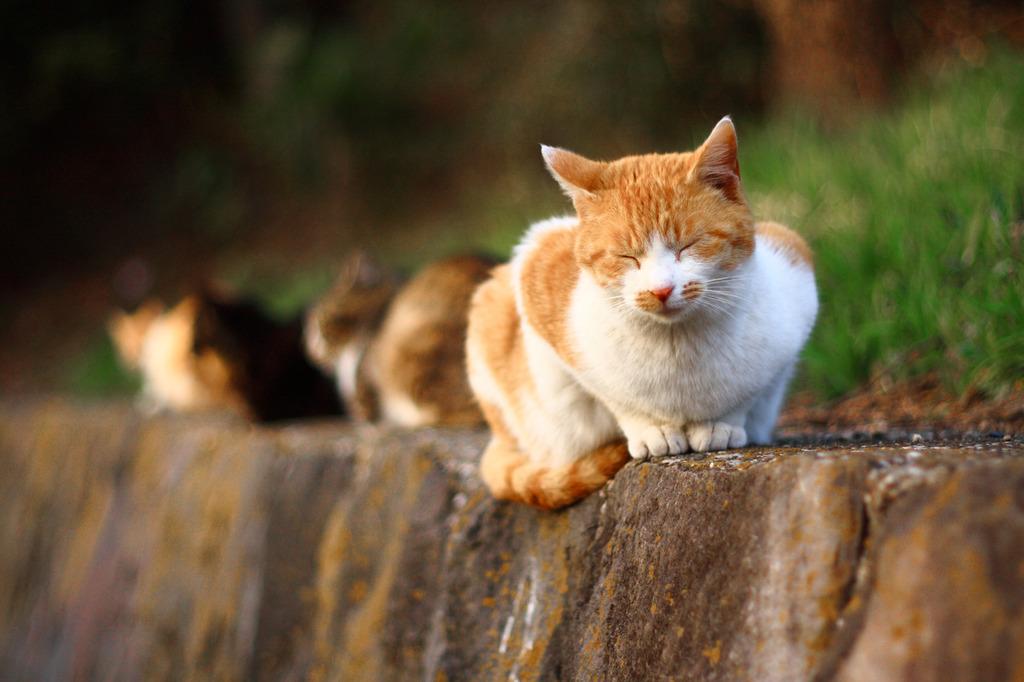 晴れ上がり 雨上がり 猫日和。