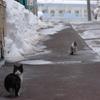 路上のネコちんたち