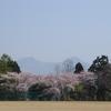駒ケ岳と桜