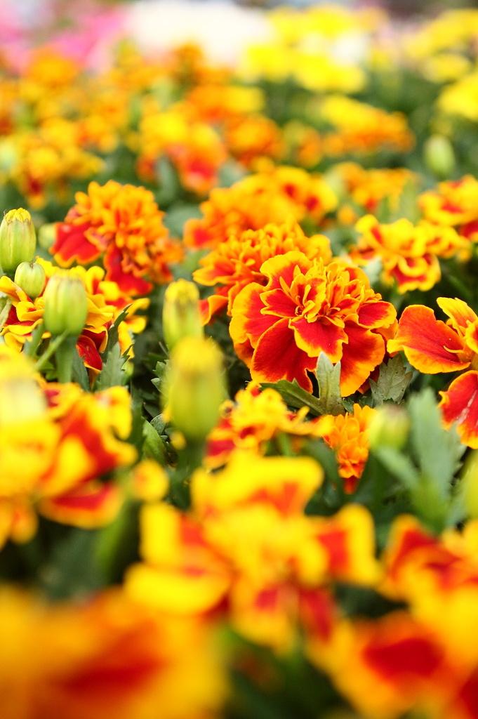 orangerange