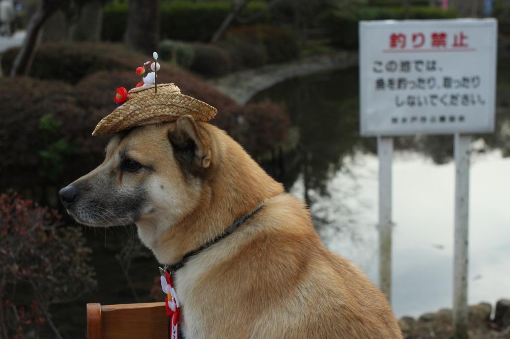 なんとも哀れな帽子犬