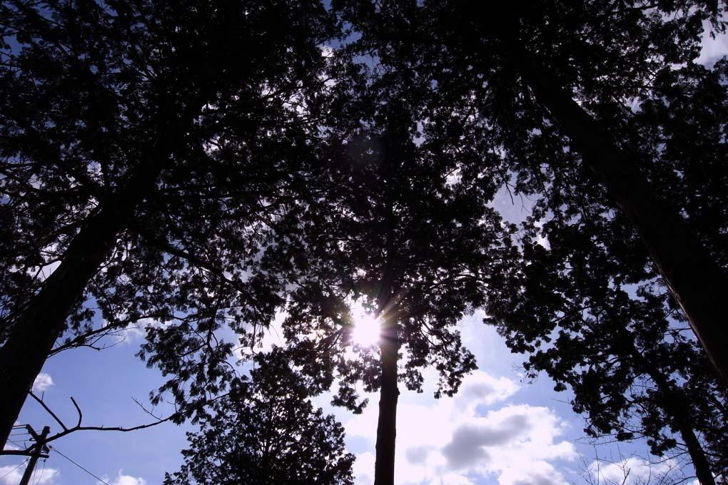 木々からこぼれる光