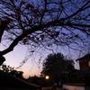 夕景の小道