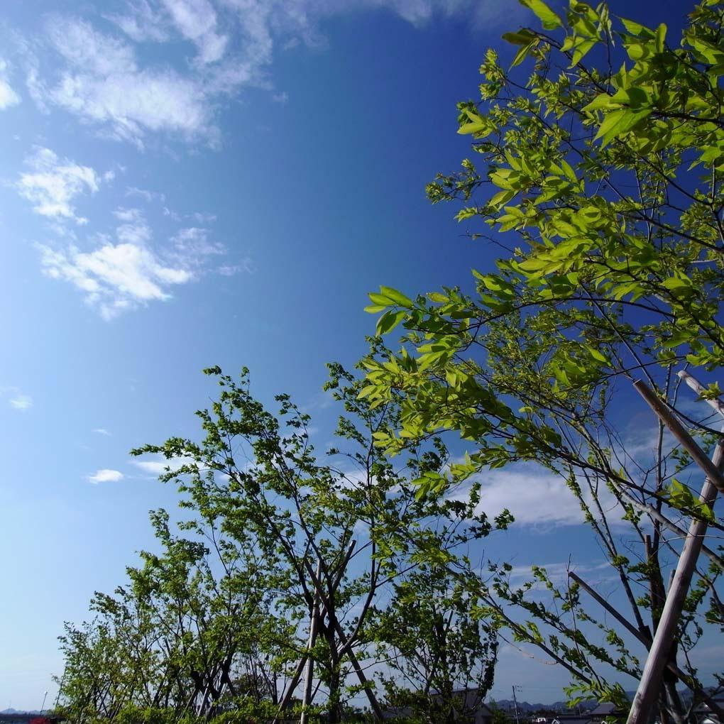 緑と青(カラー)