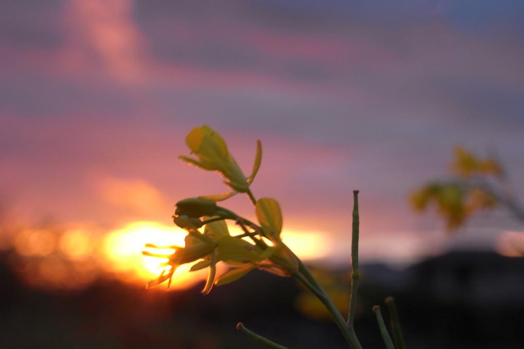 帰り道に見た夕日