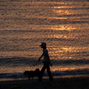 夕陽のお散歩