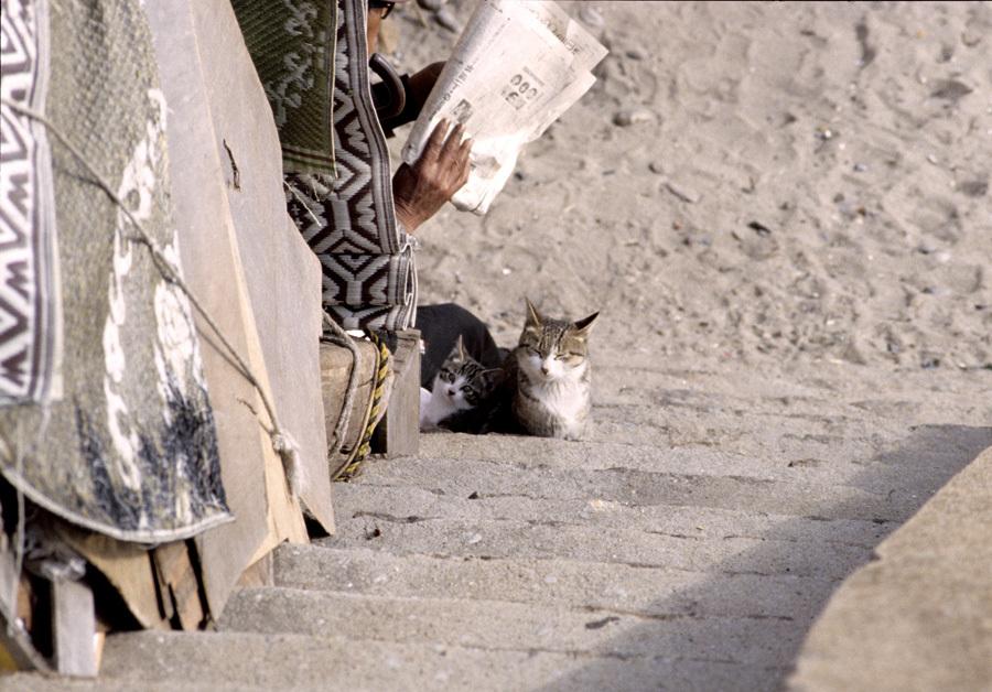 昭和劇場 「須磨海岸にて」