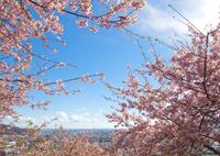 OLYMPUS E-P2で撮影した(春の空)の写真(画像)