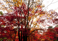 OLYMPUS E-P2で撮影した(染まる木々)の写真(画像)