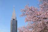 東京桜風景