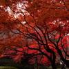 やっと秋だ~!!