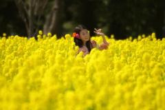 菜の花畑の妖精