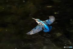見事な翼型