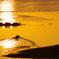 黄金の湖面 2
