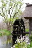 新緑の水車小屋