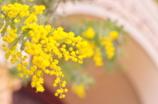 ノーザンチャーチの春