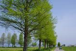 新緑の湖畔