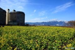 早春の花畑
