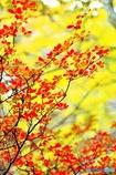煌めく季節