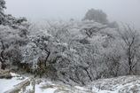 御在所岳冬の芸術品