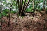 ブナ清水の森