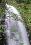 新緑の不動滝