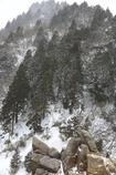 樹氷が見たくて!