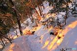 朝陽の木漏れ日