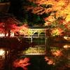 日本 秋の庭