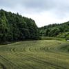 畑、田んぼ
