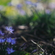 花便り - 春陽を求めて -