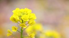 花便り - 快活な春 -
