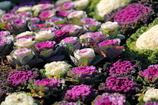 花便り - 冬花壇 -