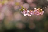 花便り - 春陽に輝く -