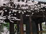 桜の鐘突堂