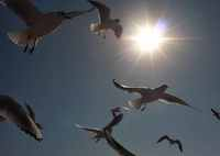 PANASONIC DMC-G6で撮影した(乱舞)の写真(画像)