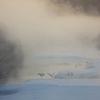 毛嵐の中で 丹頂鶴