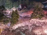 桜に浮かぶ高遠城址公園