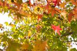 秋色のほし