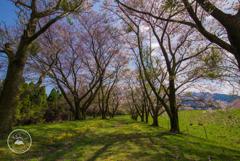 花散る桜トンネル