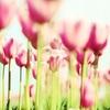 今年の思い出 やっぱり春って大好き